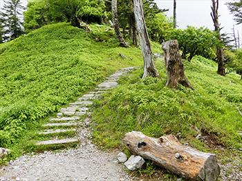 剣山・尾根道コース