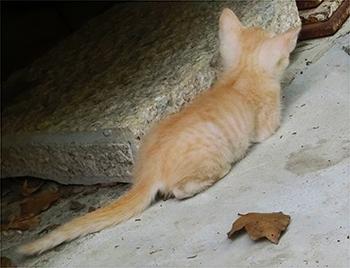 四国別格6番龍光院(りゅうこういん)の猫