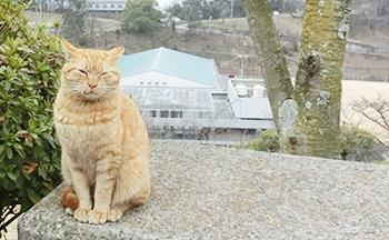千光寺の猫