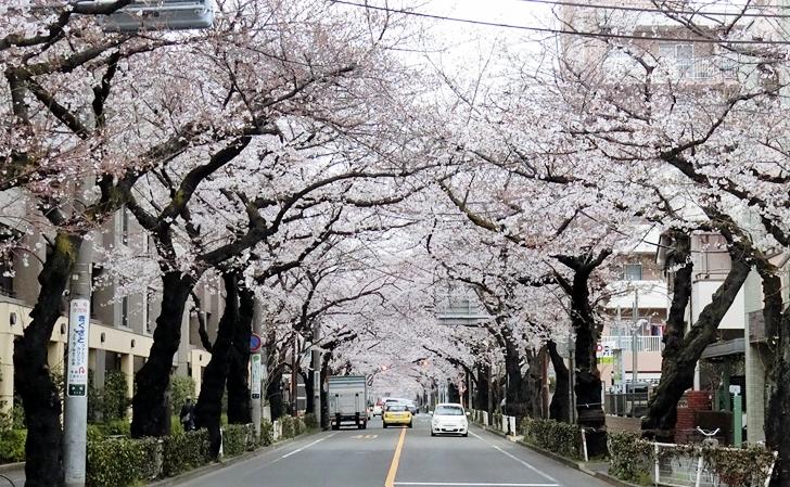 武蔵野市・中央通り