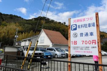 有料駐車場・河津桜・静岡