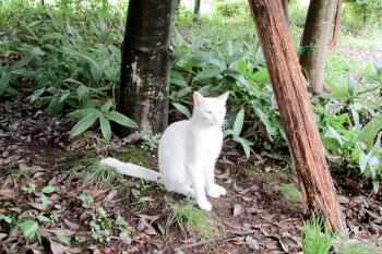喜連川早乙女温泉にいた猫