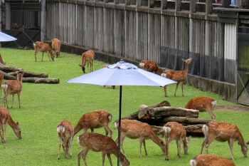 奈良の子鹿公開・鹿苑
