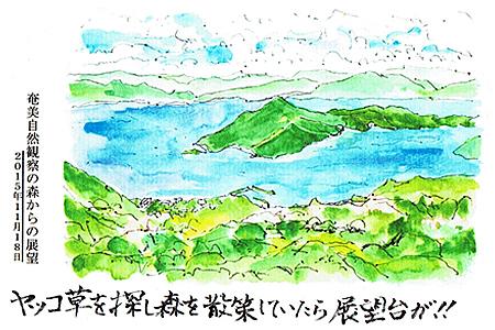 奄美自然観察の森からの展望