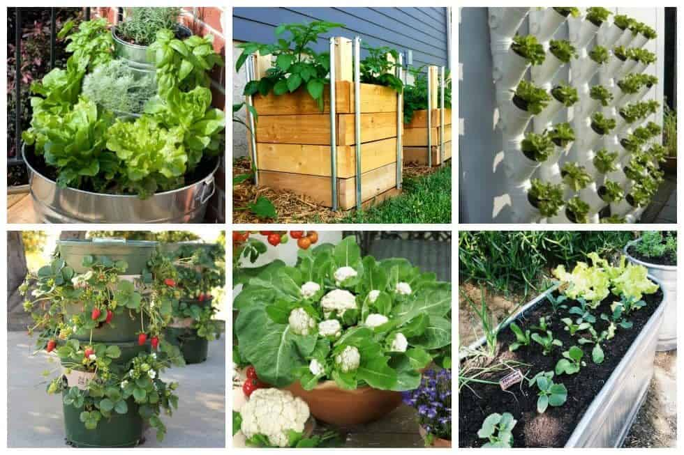 10 Easy Container Vegetable Garden Ideas for Your Yard ... on Vegetable Garden Ideas For Backyard id=57907