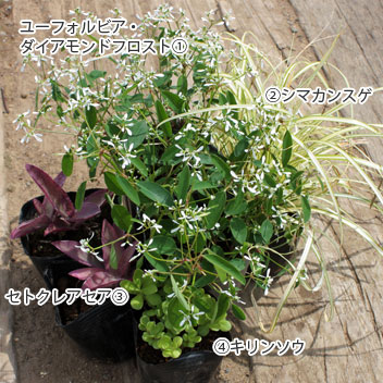 goten-garden02-03