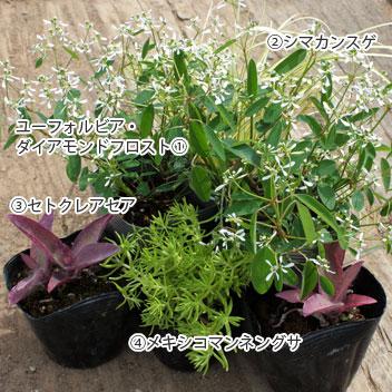 goten-garden02-04