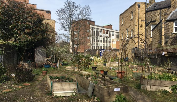Royal Hill Community Garden