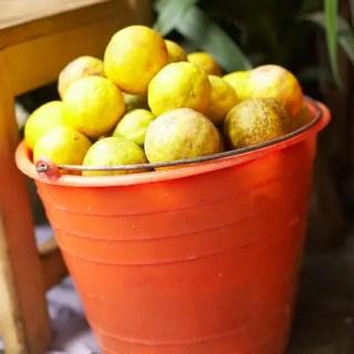 Official lemon tosser.