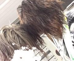 池袋キャバクラはちみつくろーばー あさ 髪の毛