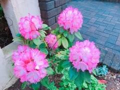 池袋キャバクラはちみつくろーばー こう お花