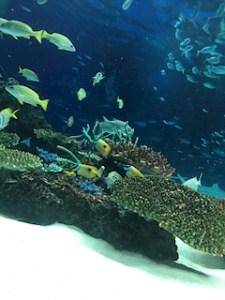 池袋キャバクラはちみつくろーばー かの 水族館