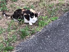池袋JK制服キャバクラ【はちみつくろーばー】さえ 野良猫