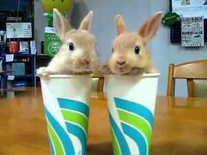 We may be hardened gamers, content to bitch-slap our slave-girls till the cows come home but two bunnies in cups are still cute enough to make us go awwwwwww