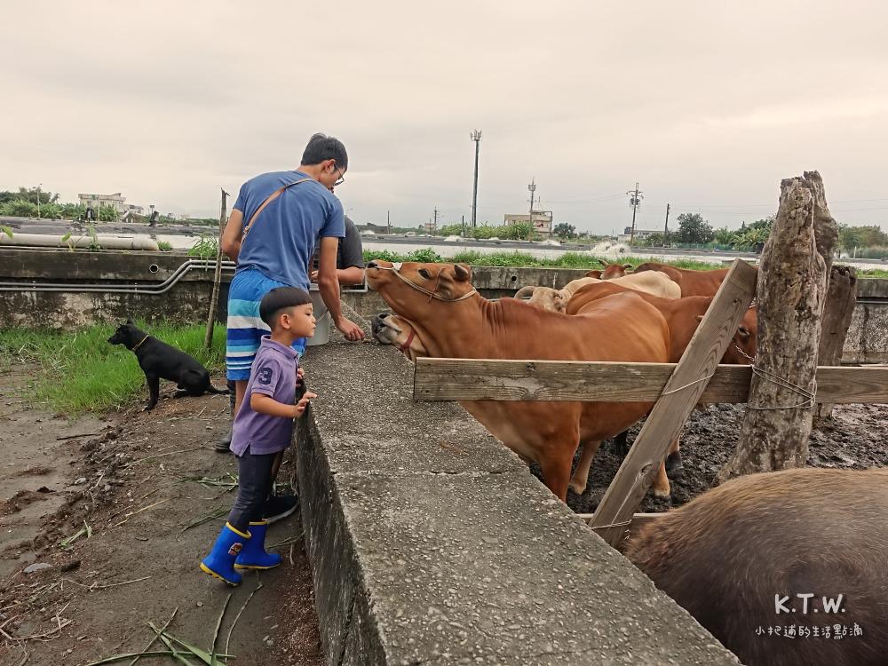 和牛牛親近