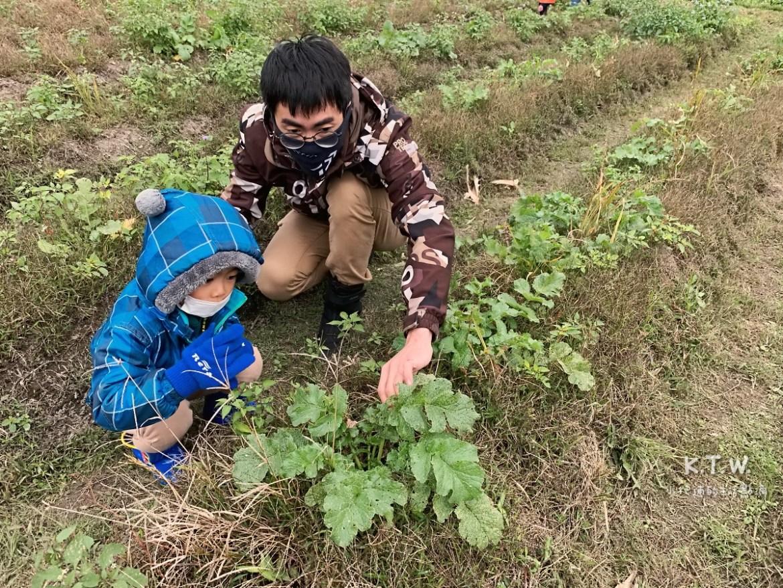 田裡找蘿蔔