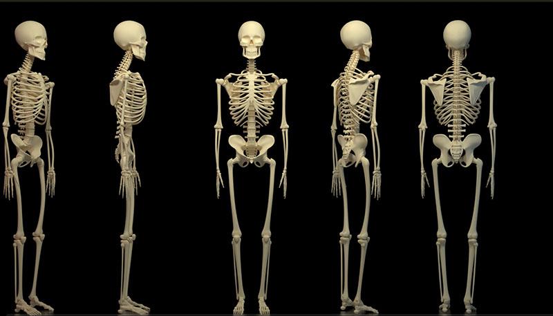 Скелет женский фото 1