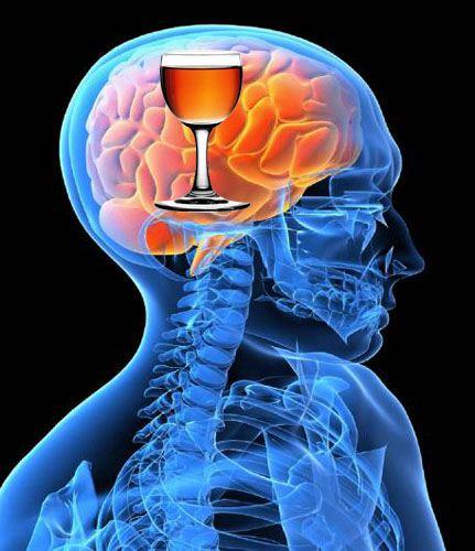 Картинки по запросу алкоголь и мозг