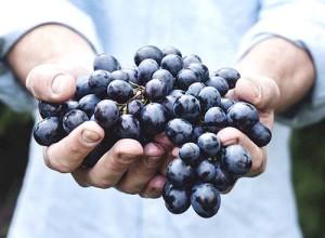 Ягоды, виноград и орехи