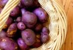Фиолетовый картофель против онкологических заболеваний