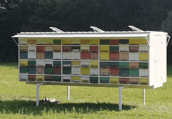 AZ hives on stilts