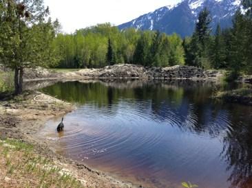 Argus enjoying the pond. Did I say pond? I mean muddy swamp. Thanks, Argus.