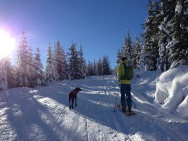 Out on a winter jaunt with the pups in -16C (3F) degree weather.