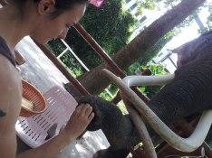 Sylvie von Duuglas-Ittu - Elephant - Chiang Mai Zoo