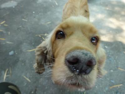 Dog Loves Me - Hang Dong