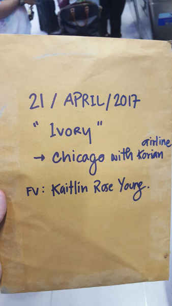 Kaitlin Young soi dog foundation 3