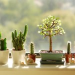 8 Indoor Plants to Liven Up Your Office Desk