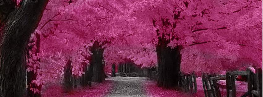 Facebook-Cover-Cherry-Bloss