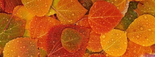 autumn-leaves-background-fa