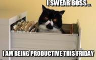 Friday Funnies productive cat