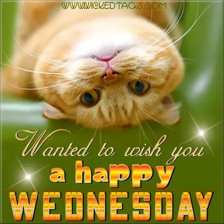 Happy Wednesday Cat 905 Business Com