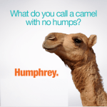 Happy Humpday – 905business.com