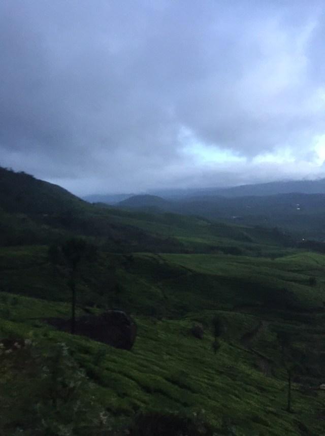 Beautiful tea gardens of Munnar at daybreak