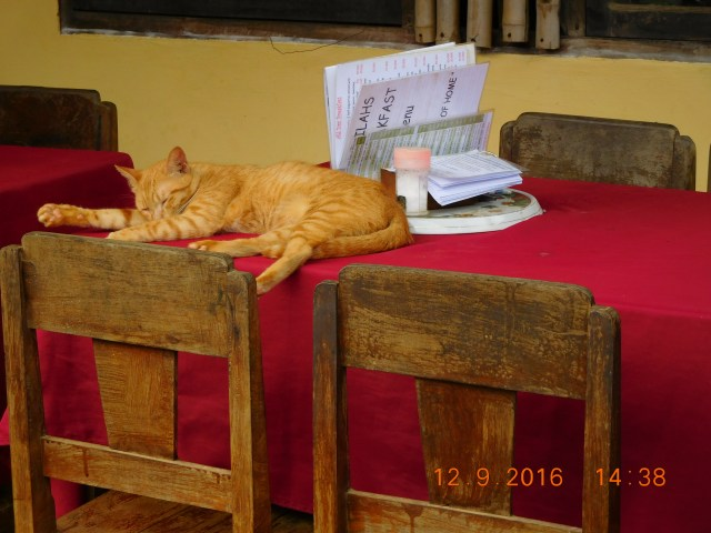 The perfect cat-nap on a restaurant table...