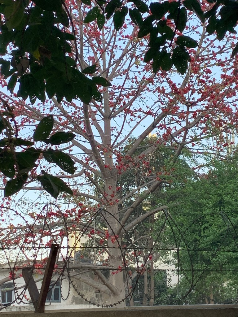 Forest Flame Tree