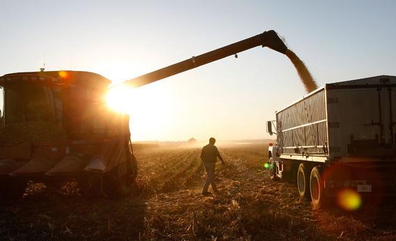 farmer grain pile wheat harvest agriculture