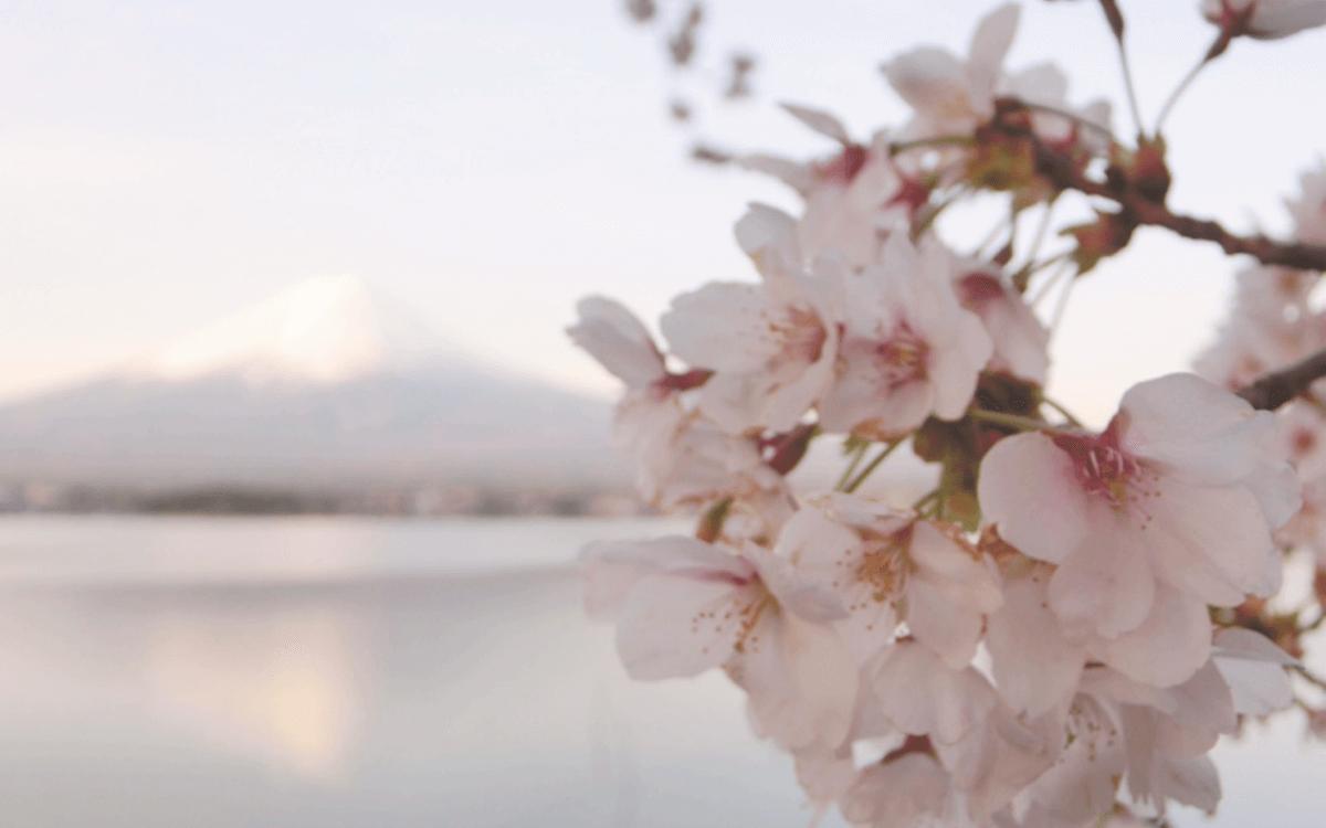 日本自助|富士山河口湖湖景民宿 Lake Villa Kawaguchiko