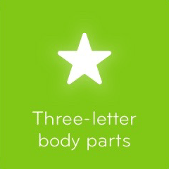 Three letter body parts 94