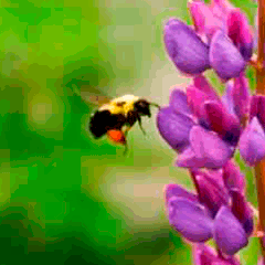 94 bee on flowers picture answers