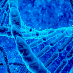 94 dna picture