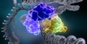 Inherited Genetics Drives Cancer's Spread
