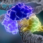 Inherited Genetics Drives Cancer's Spread