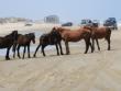 Carova-Beach