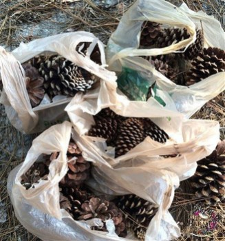 Inspiring Pine Cones Christmas Decoration Ideas 03