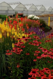 Inspiring Planting Combination Ideas For Your Garden 04