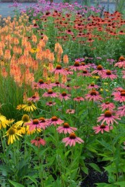 Inspiring Planting Combination Ideas For Your Garden 08